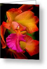 Tropical Splendor Greeting Card