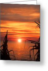 Tropical Sunset V6  Greeting Card