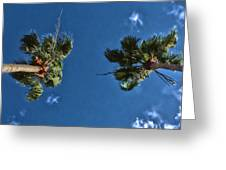 Tropical Twins Greeting Card