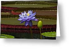 Tropical Water Lilies Greeting Card