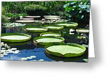 Tropical Water Lily Greeting Card