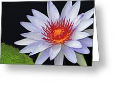 Tropical Waterlily Greeting Card