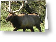 Trotting Elk  Greeting Card by The Kepharts