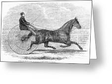 Trotting Horse, 1861 Greeting Card