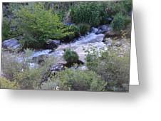 Trout Creek Greeting Card