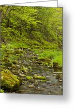 Trout Run Creek 4 Greeting Card