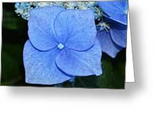 True Blue. Greeting Card