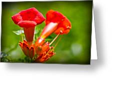 Trumpet Blossoms Greeting Card