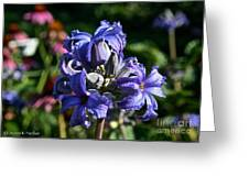 Tube Clematis Blossoms Greeting Card
