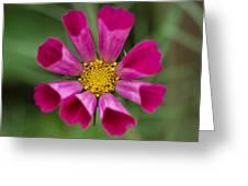 Tubular Petals Greeting Card