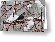 Tuft Winter Greeting Card
