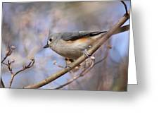 Tufted Titmouse - On The Slope Greeting Card