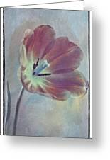 Tulip Adventure Greeting Card