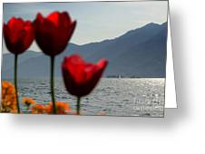 Tulip And Lake Greeting Card
