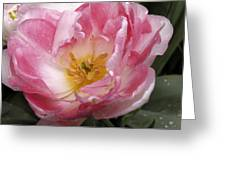 Tulip Angelique Greeting Card