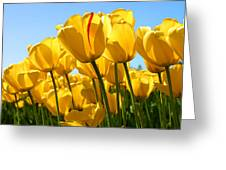 Tulip Greeting Card by Dhirendra  Jaiswal