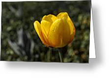 Tulip Drops Greeting Card