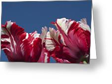 Tulip Estella Reinfeld Greeting Card