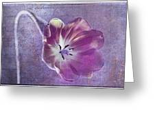Tulip Fancy Greeting Card