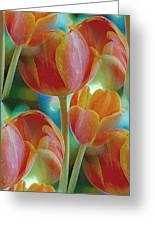 Tulip Fascination Greeting Card