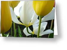 Tulip Flowers Art Prints Yellow White Tulips Floral Greeting Card by Baslee Troutman