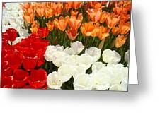 Tulip Flowers Festival Art Prints Floral Baslee Greeting Card