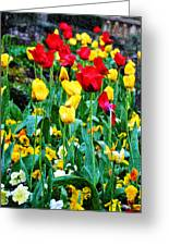 Tulip Garden Greeting Card