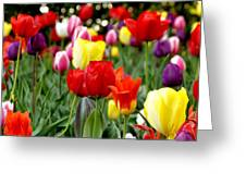 Tulip Garden University Of Pittsburgh  Greeting Card