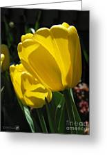 Tulip Named Big Smile Greeting Card