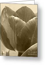 Tulip Named Passionale Greeting Card