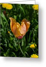 Tulip Opening Greeting Card