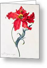 Tulip Perroquet Rouge Greeting Card