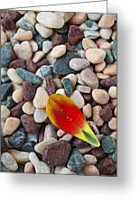 Tulip Petal And Wet Stones Greeting Card