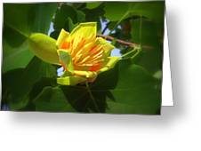Tulip Poplar Flower Greeting Card