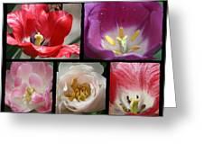 Tulip Sampler Greeting Card