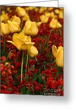 Tulip Sunshine Greeting Card
