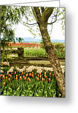 Tulip Time In The Skagit Valley Greeting Card