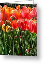 Tulip Uprising Greeting Card