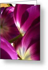 Tulip Weave Greeting Card