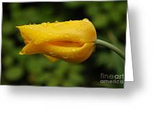 Tulip With Raindrops 2 Greeting Card