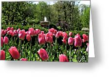 Tulips And Fountain Greeting Card
