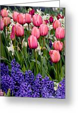 Tulips And Friends Greeting Card
