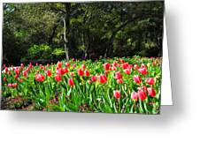 Tulips And Woods Greeting Card