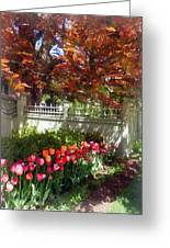 Tulips By Dappled Fence Greeting Card