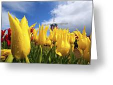 Tulips In A Field And A Windmill At Greeting Card