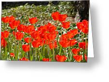 Tulips In The Field Greeting Card