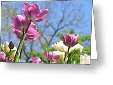 Tulips In The Sun Greeting Card