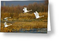 Tundra Flight Greeting Card