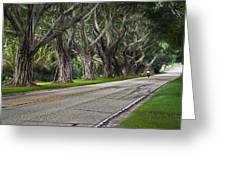 Tunnel Of Trees Greeting Card by Robert Smith