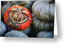 Turban Pumpkin Greeting Card